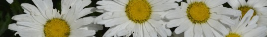 cropped-garden-21.jpg
