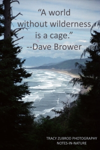 DAVE BROWER