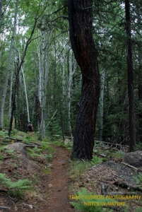 KACHINA TRAIL ARIZONA