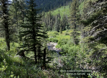 PECOS WILDERNESS
