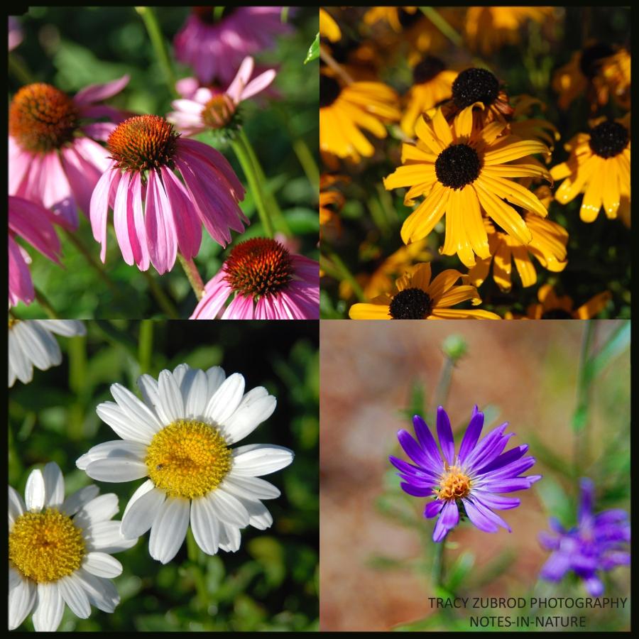 SUMMER FLOWERS-1