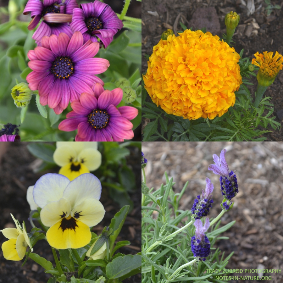 EARLY GARDEN FLOWERS